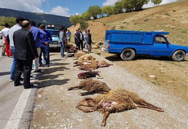 تلف شدن 20راس گوسفند در بردسکن بر اثر سانحه رانندگی