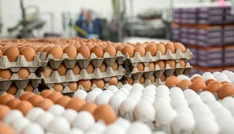 قیمت تخم مرغ چقدر شده است؟